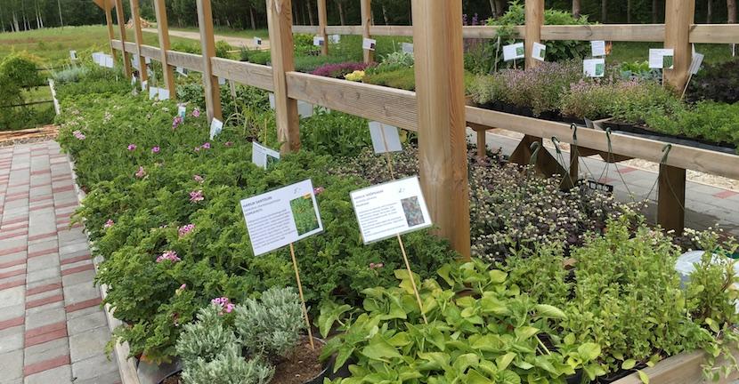 Tamme talu ürdiaaed - Taimed müügiks