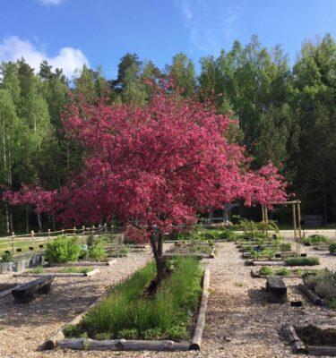 13. juuni 2020 Tamme talu ürdiaia lahtiste uste päev
